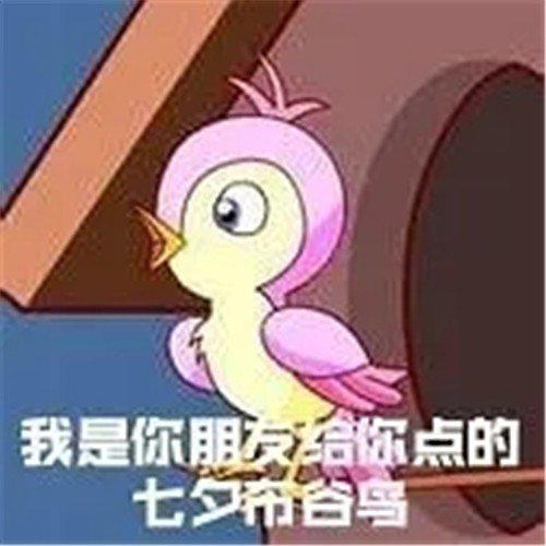 七夕布谷鸟表情包完整版